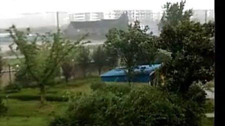 闵行区吴泾镇葵花影响狂风暴雨实拍