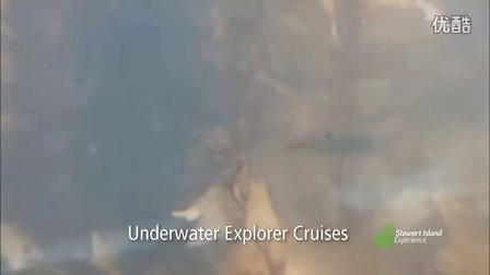 Stewart Island 斯图瓦特岛--Real Journeys真实旅程
