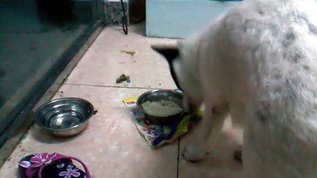 狗吃食的时候怎么这样??