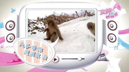 《女神の动物园》第2期当宠物遇上雪
