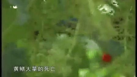致富经黄鳝养殖视频QQ 465989748