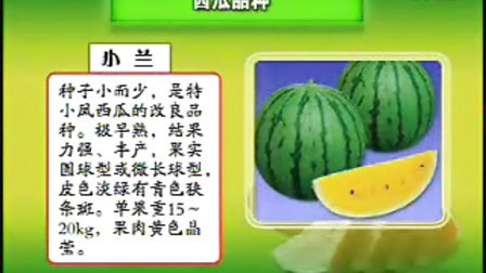小型西瓜立体栽培新技术_小型西瓜立体栽培新技术_1