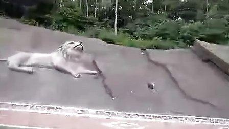 哈尔滨动物园门票团购(哈尔滨森林动物园