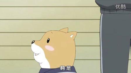 柴犬子 08