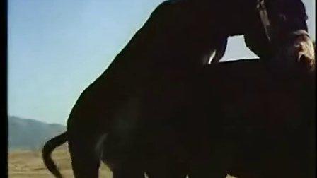 各种动物繁殖交配全过程裸露与残酷的动物世界探索动物繁殖的奥秘