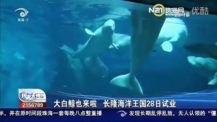 大白鲸也来啦 长隆海洋王国28日试业