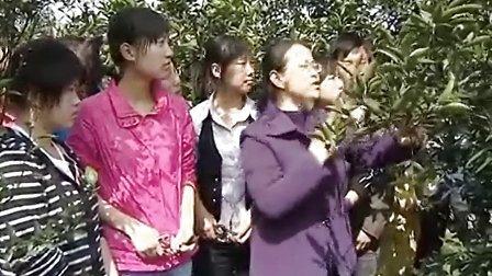 柑橘的冬季修剪(岳阳职业技术学院)