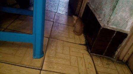 猫咪起床前的第一件事情
