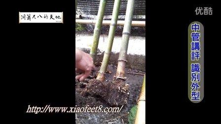 竹材採集-因材施教(中管)