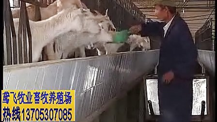 农村羊舍建设成本 羊场建造视频