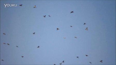 麻雀满天飞
