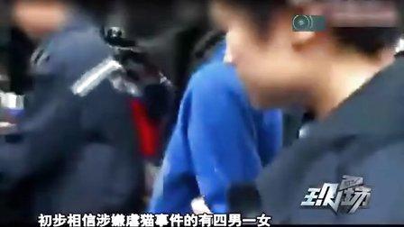 《DV现场》2012年1119 四男一女虐猫 或重罚并坐牢