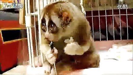 有双无辜大眼的懒猴吃饭团超可爱拉杆箱品牌排名laoganxiang.5d6d.com