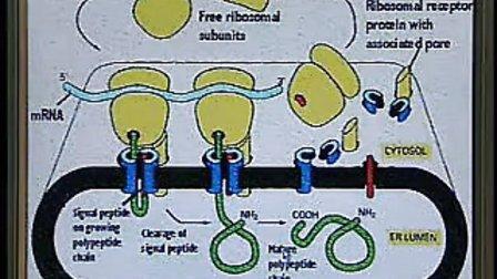 人体组织学与胚胎学01 中国医科大学