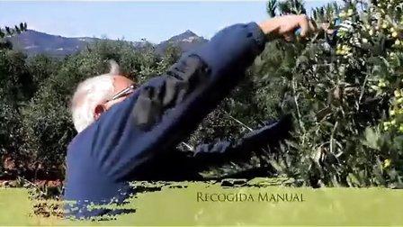 西班牙特级初榨橄榄油