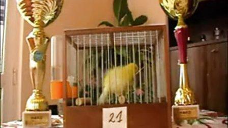 歌手金丝雀
