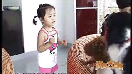 狗狗大百科-苏俄猎狼犬