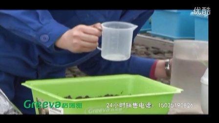 樱桃萝卜种植 格瑞雅 阳台种菜 阳台菜植 绿色蔬菜 家庭园艺