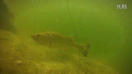 水下高清 德州钓组 产卵期鲈鱼(产床)绝对值得一看
