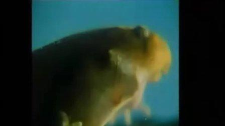 生物八年级下册第七单元第一章生物的生殖和发育第三节两栖动物的生殖和发育课堂录像人教