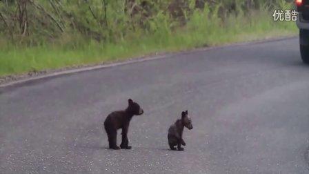 两只小熊当街打架视频网上爆红