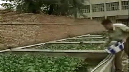 稻田黄鳝养殖技术视频 完整版