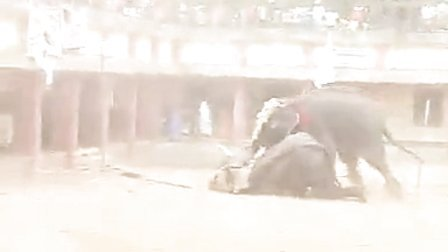《骑大象危机》加強安全意识~免墜旅游陷阱之醒目集