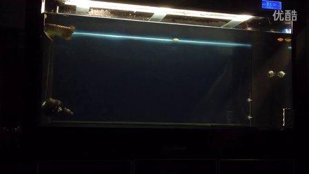P 龙鱼缸
