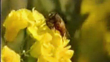 10中蜂科学饲养III