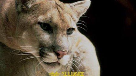 01 动物图片(认识动物课程)