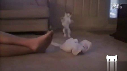 搞笑动物 主人的臭脚丫熏到猫咪