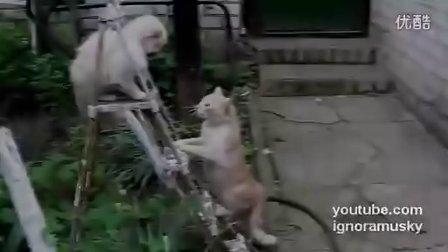 【绝对经典】史诗级别的猫咪打斗,一击必杀!当心笑翻【时光出品】