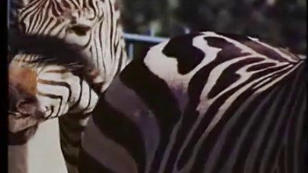 裸露与残酷的动物世界-探索动物繁殖的奥秘(四)