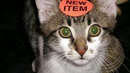 可爱搞笑猫咪图片合集