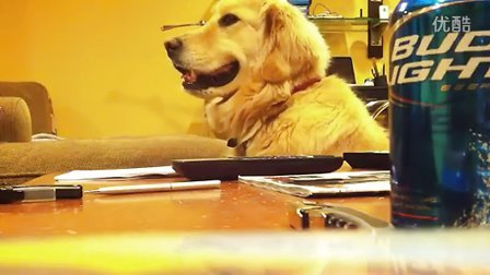 喜欢听吉他的狗狗 - AcFun.tv