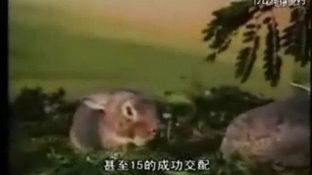 动物自然繁殖篇42