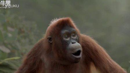 搞笑创意广告 大猩猩大秀风骚舞姿