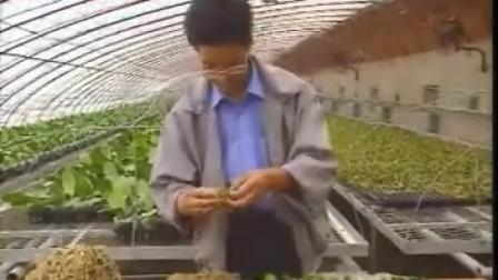 蝴蝶兰的栽培与管理
