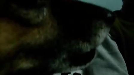 超级爱撒娇的小猫1