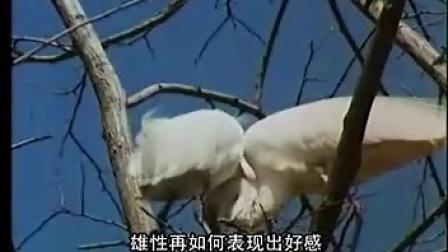 裸露与残酷的动物世界-探索动物繁殖的奥秘(二)