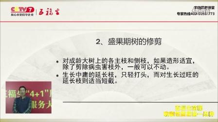 樱桃树整形修剪技术--五福生菌肥农技专家讲堂(十六)