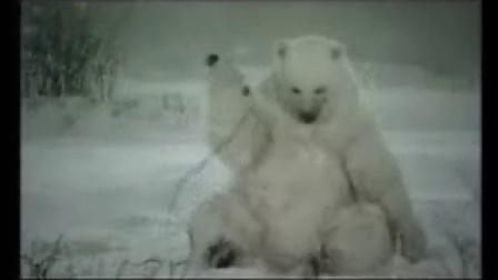 北极熊也剪毛!