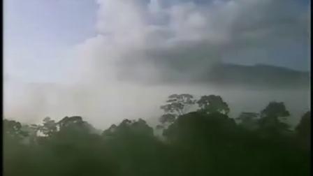 热带雨林01