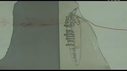 Morphology of a Shark- Water Flow Tank Video 1