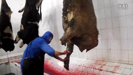 第二道工序:卸牛前肢,吊挂沥血