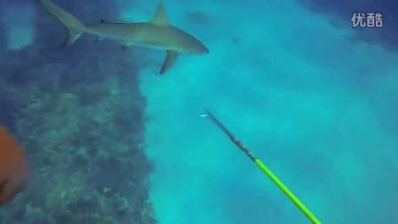 勇敢的潜水员鲨口逃生!