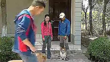 18-怎么训练狗狗有礼貌-怎么训练狗狗在社区见人主动避让