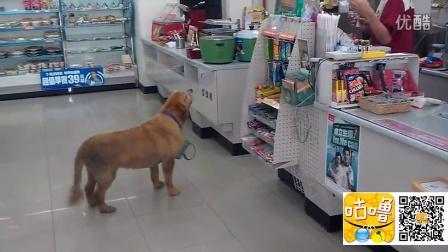 实拍狗狗帮主人买面包 还知道等著找零钱