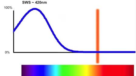 光与优活 人眼中第三种感光细胞的发现