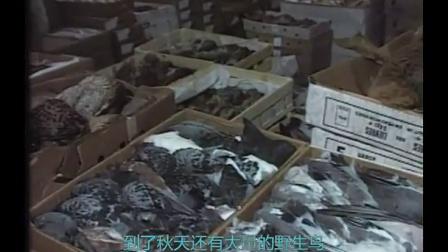 [NHK][纪录片]食物和文明的世界群像系列 (序) :食物的起源-5万